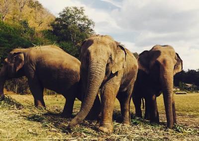 Jenn Thailand elephant